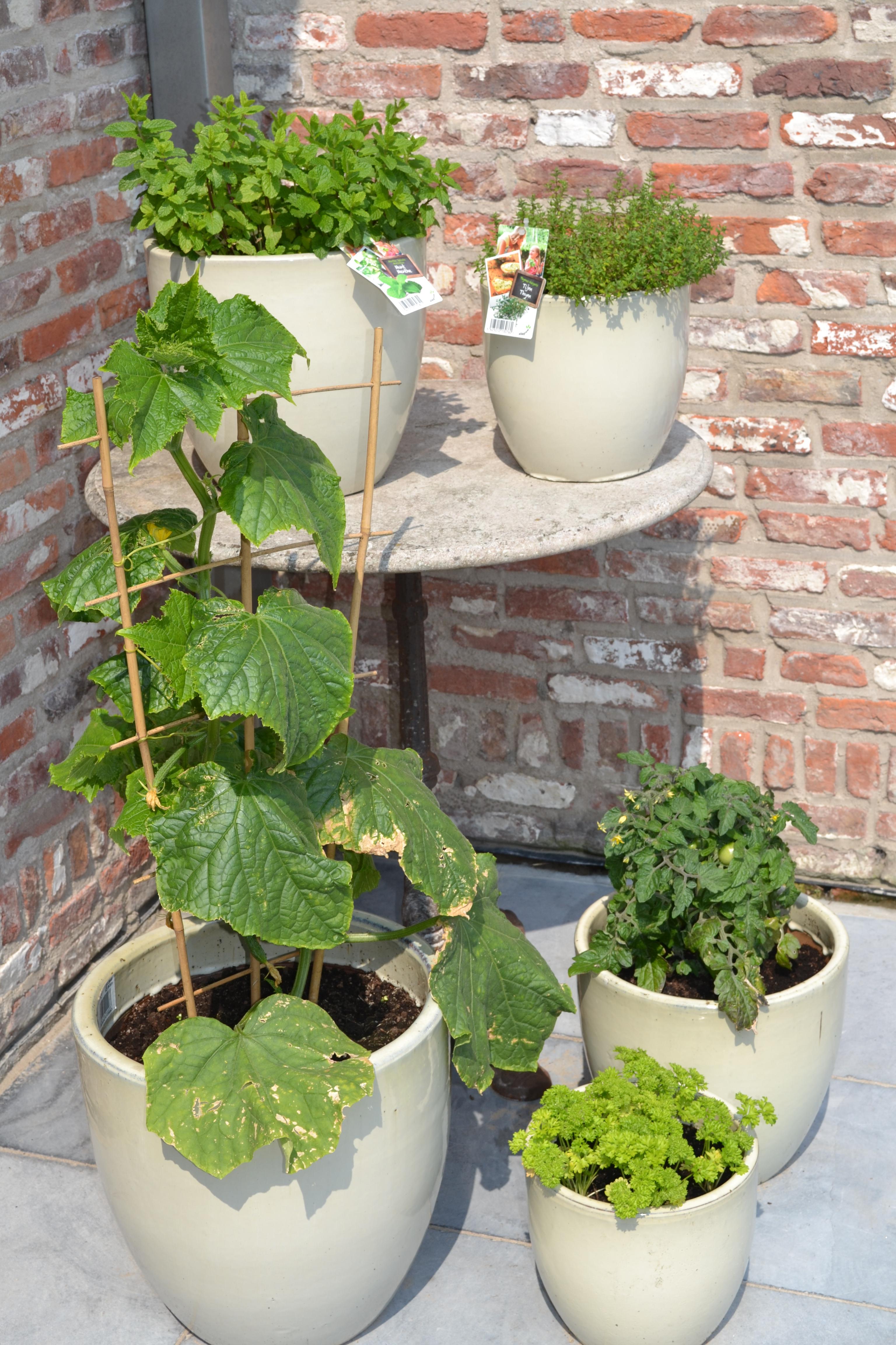 Kruiden en groenten op het balkon - Groenten in potten op balkons ...