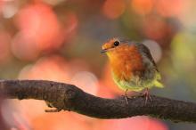 Vergeet de vogeltjes in de tuin niet….